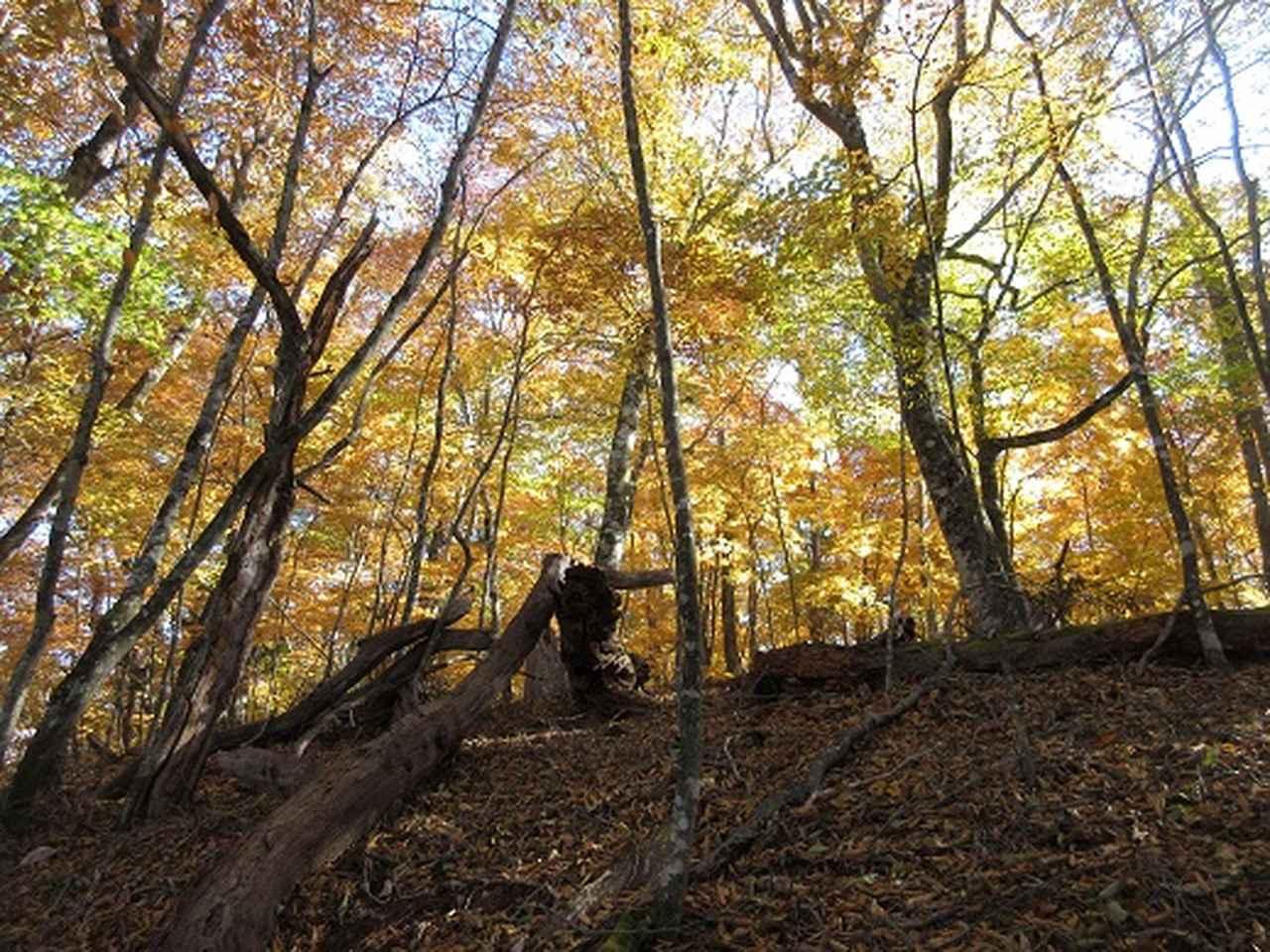 画像12: 少し早いですが10月の 「大菩薩嶺から牛ノ寝通り」 ツアーのご案内です!