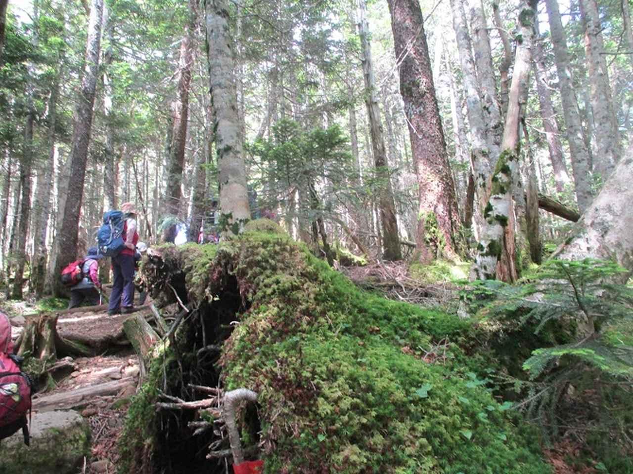 画像4: 【山旅会・登山ガイドこだわりツアー】岡田ガイドからの便り・硫黄岳ツアーに行ってきました!(1日目)
