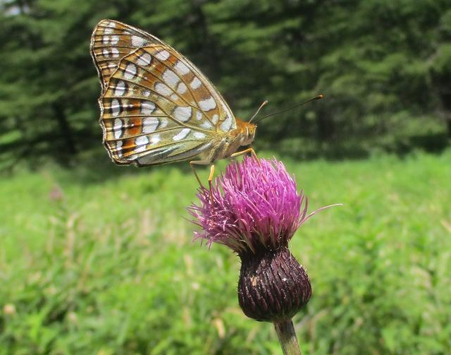 画像15: 8月7日に岡田ガイドのハイキングコースで池の平湿原へいってきました♪