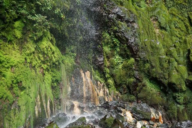 画像: 唐滝(三原山の中腹付近にある唐滝 36.3m)