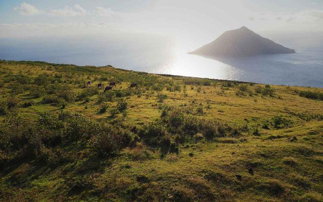 画像: 八丈富士牧場ふれあい広場(八丈富士の中腹に位置する牧場。牛を間近から観察できます。)