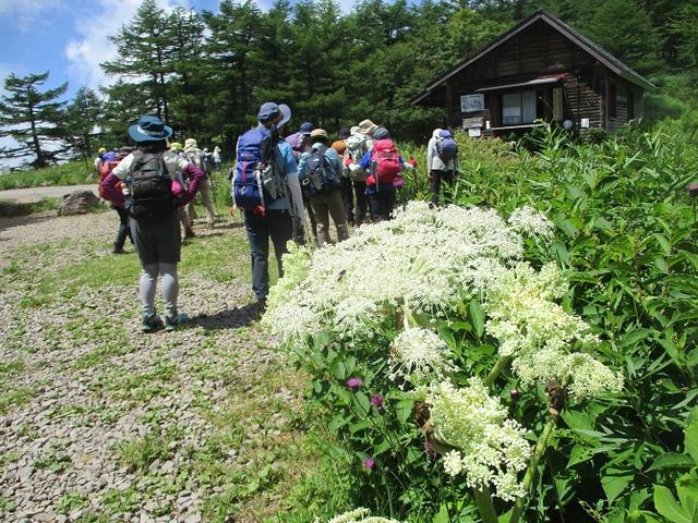 画像1: 8月7日に岡田ガイドのハイキングコースで池の平湿原へいってきました♪