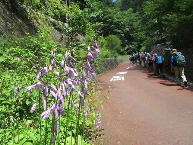 画像3: 8月8日に岡田ガイドのコースで東京都と山梨県にまたがる日本300名山・山梨100名山の 三頭山 へ行ってきました♪