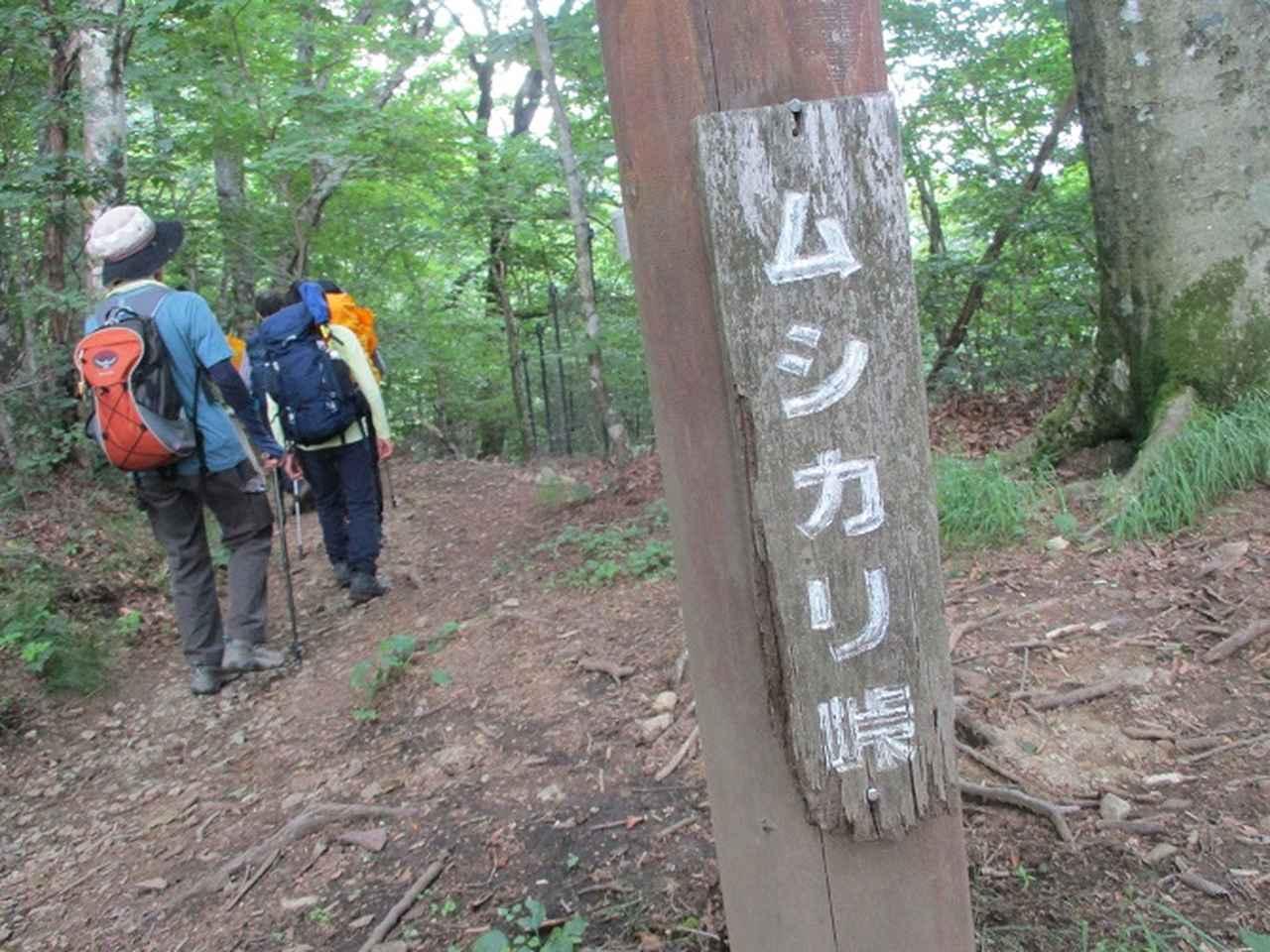 画像13: 8月8日に岡田ガイドのコースで東京都と山梨県にまたがる日本300名山・山梨100名山の 三頭山 へ行ってきました♪