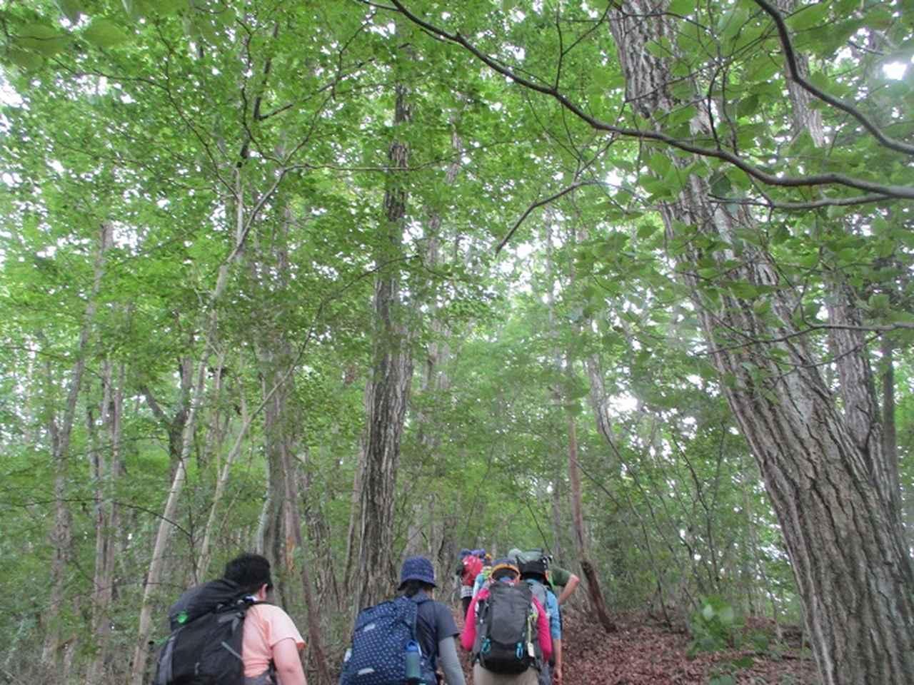 画像6: 8月10日に岡田ガイドの山旅会現地集合 「大塚山」 へ行ってきました!