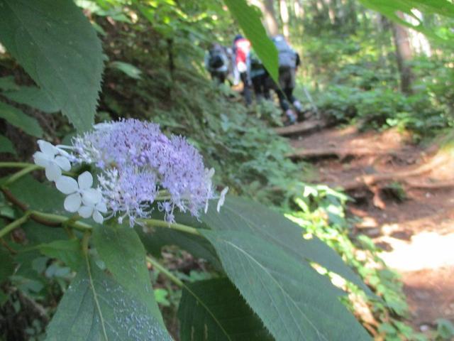 画像5: 8月10日に岡田ガイドの山旅会現地集合 「大塚山」 へ行ってきました!