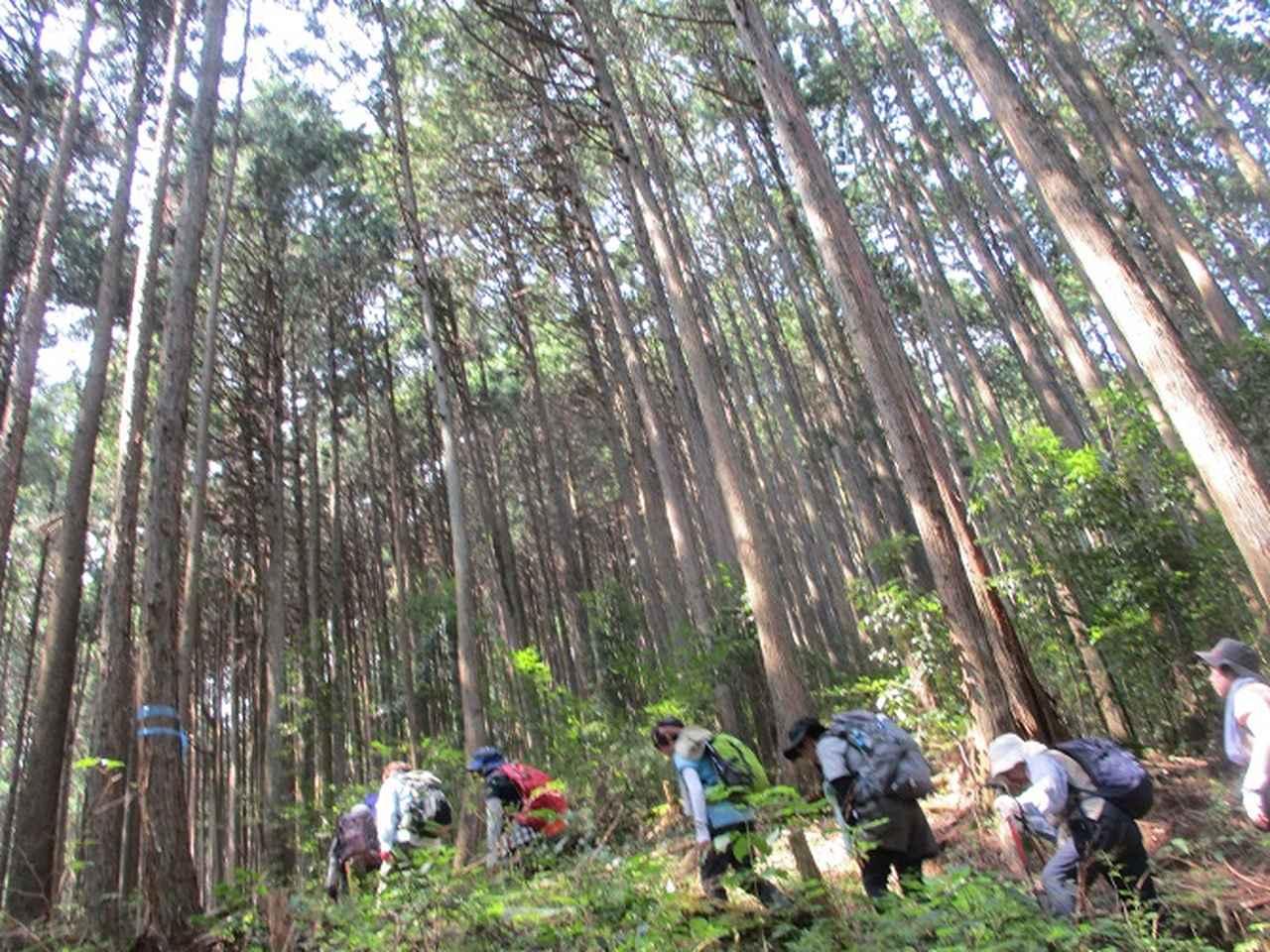 画像2: 8月10日に岡田ガイドの山旅会現地集合 「大塚山」 へ行ってきました!