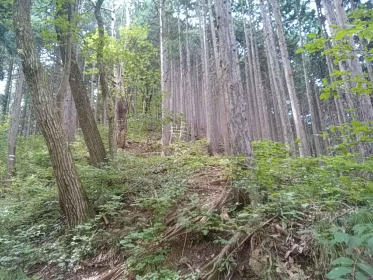 画像5: 来年冬の現地集合ツアー素材を探して北高尾周辺を歩いてみました!