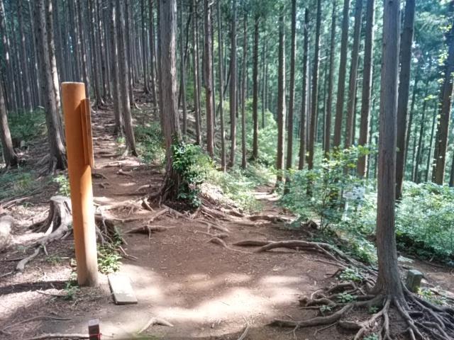 画像7: 来年冬の現地集合ツアー素材を探して北高尾周辺を歩いてみました!