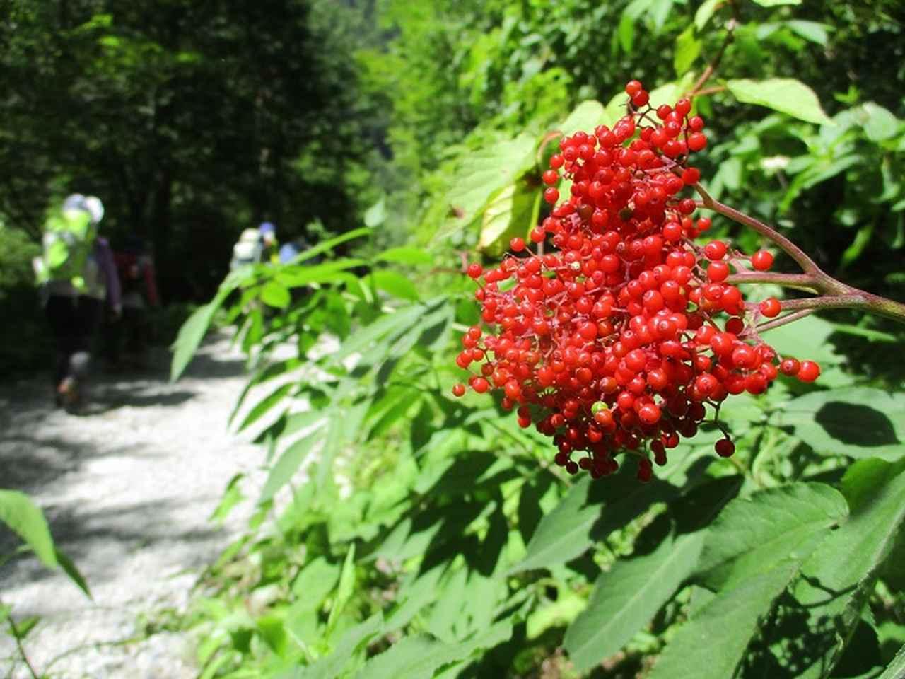 画像5: 8月1日から岡田ガイドのコースで 「ゆっくり歩く鏡平と弓折岳」 のツアーへ行ってきました!