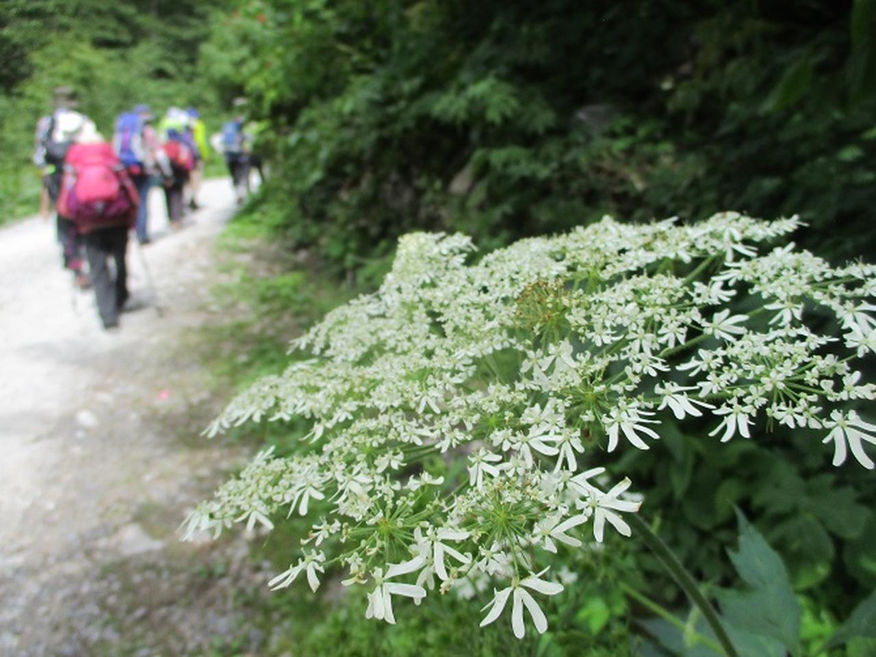 画像6: 8月1日から岡田ガイドのコースで 「ゆっくり歩く鏡平と弓折岳」 のツアーへ行ってきました!