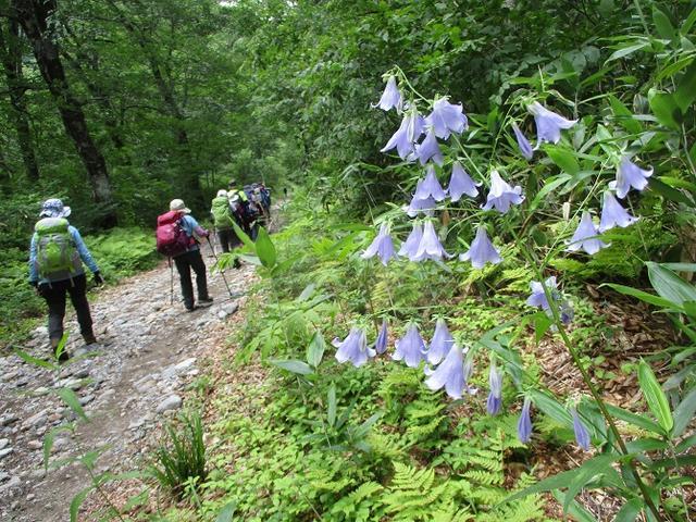 画像9: 8月13日から岡田ガイドのコースで 「ゆっくり歩く鏡平と弓折岳」 に行ってきました!