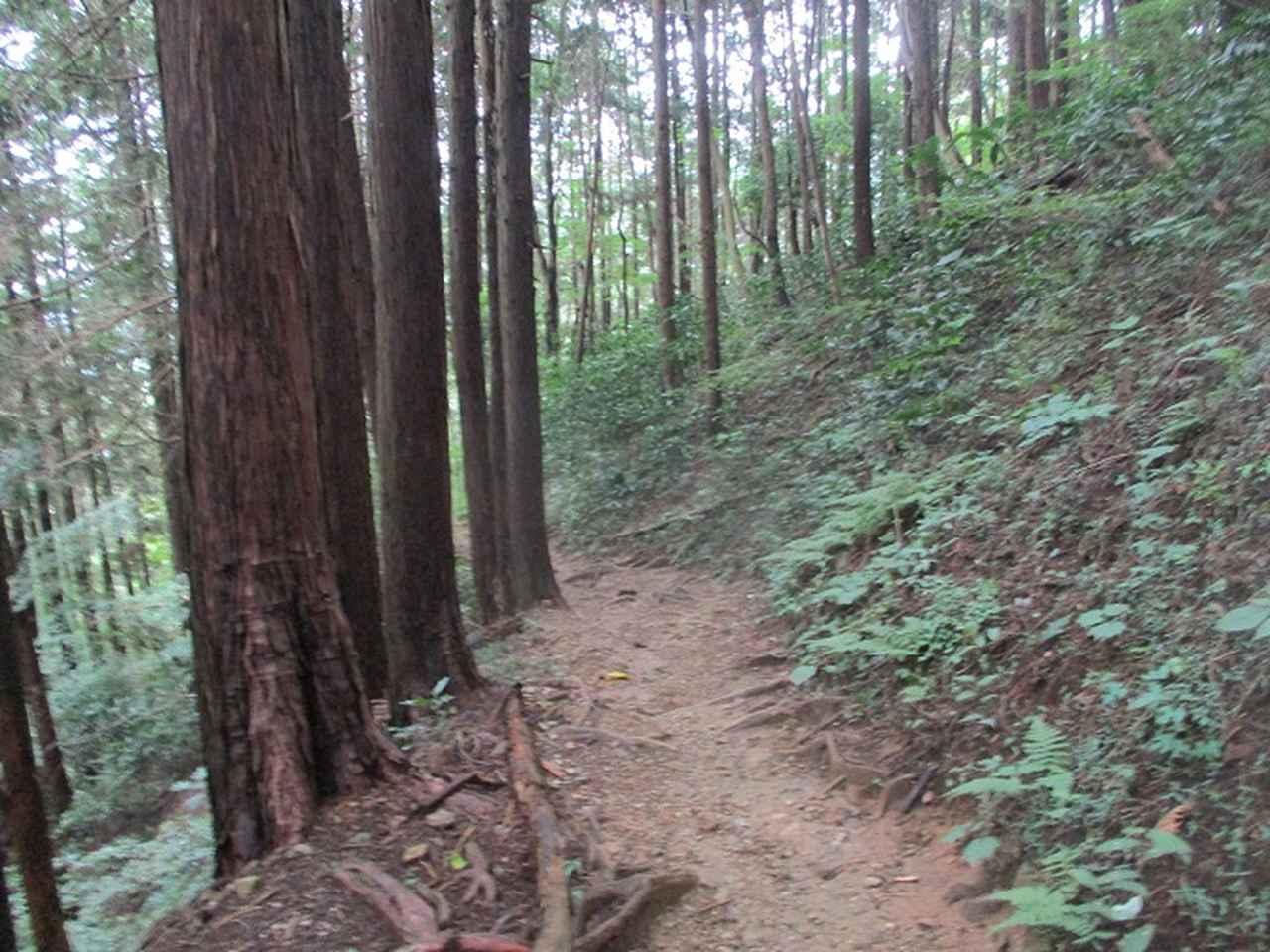 画像9: 9月の山旅会現地集合 「城山から景信山」 ツアーの下見に行ってきました!
