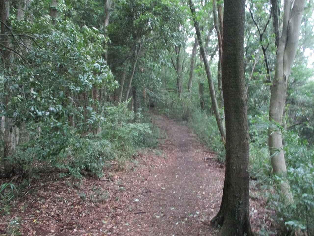 画像1: 9月の山旅会現地集合 「城山から景信山」 ツアーの下見に行ってきました!