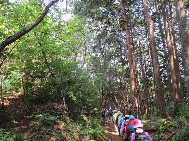 画像12: 8月17日に岡田ガイドの山旅会現地集合ツアーで、奥多摩の 日の出山 に行ってきました♪