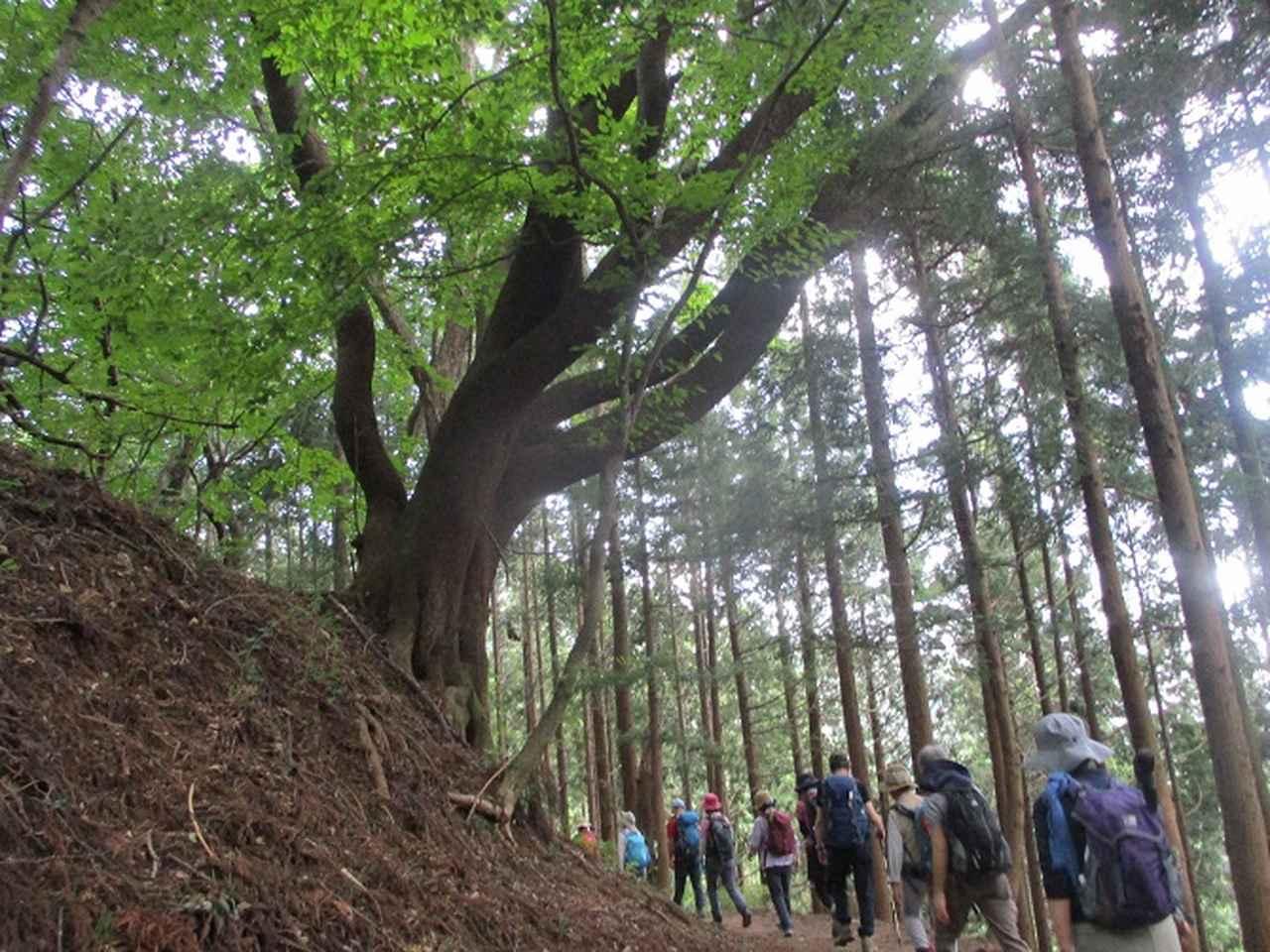 画像5: 8月17日に岡田ガイドの山旅会現地集合ツアーで、奥多摩の 日の出山 に行ってきました♪