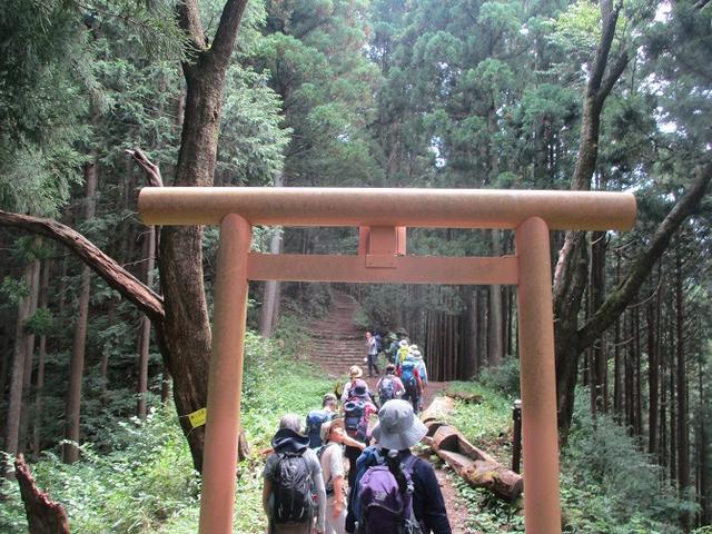 画像6: 8月17日に岡田ガイドの山旅会現地集合ツアーで、奥多摩の 日の出山 に行ってきました♪