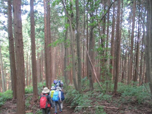 画像9: 8月17日に岡田ガイドの山旅会現地集合ツアーで、奥多摩の 日の出山 に行ってきました♪