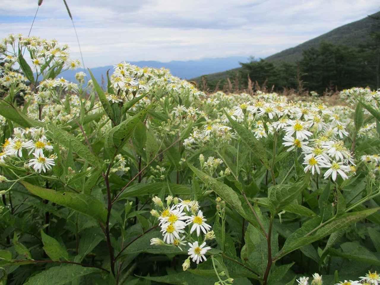 画像10: 8月23日に山旅会 「高峰山」 ツアーにいってきました!
