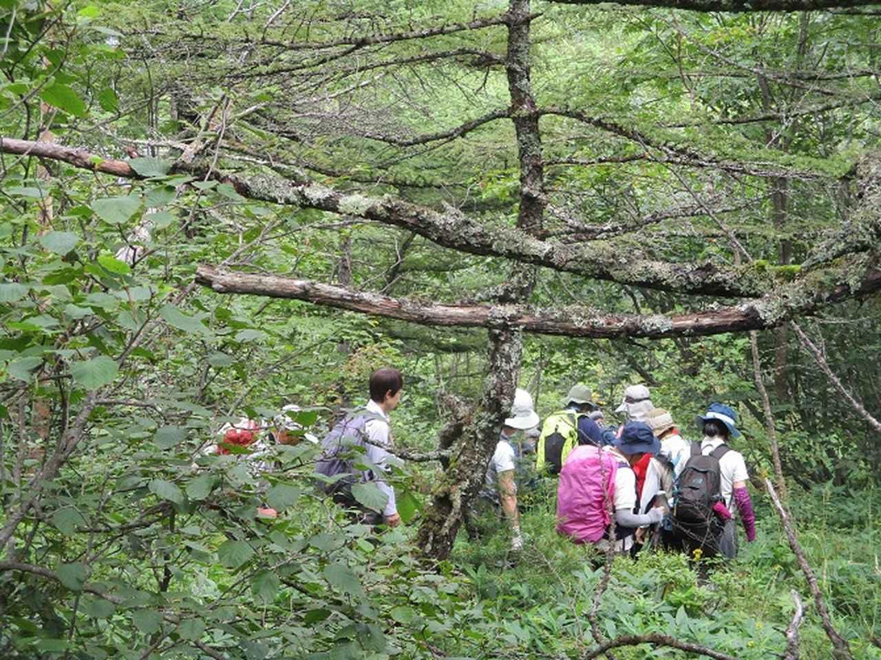 画像9: 8月23日に山旅会 「高峰山」 ツアーにいってきました!
