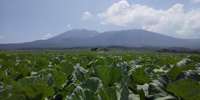 画像: キャベツ畑と浅間山(イメージ)