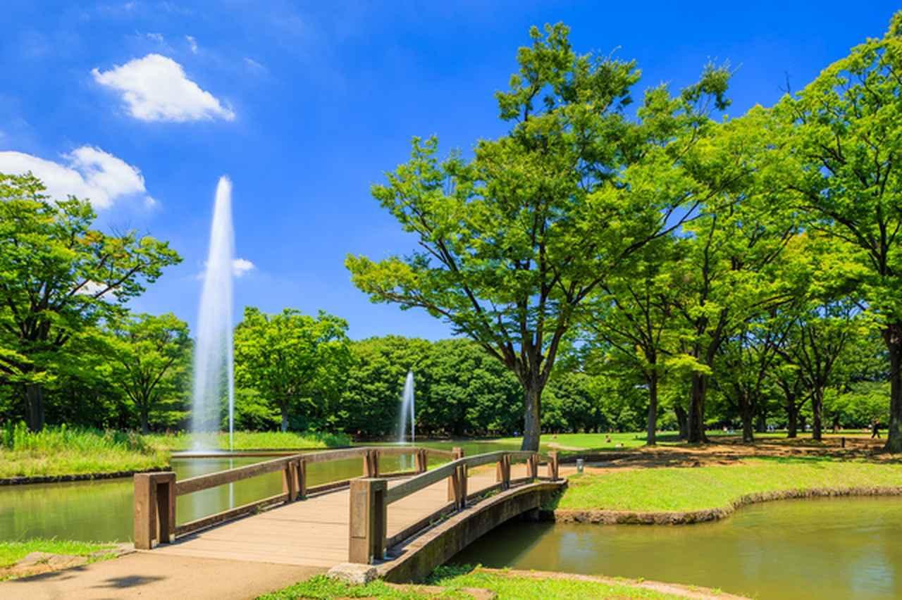 画像: 代々木公園。東京にも自然あふれる場所がたくさんあります(渋谷区編)