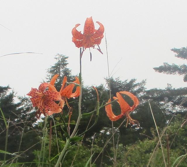 画像8: 8月28日に山旅会 鷲ヶ峰 ツアーに行ってきました!