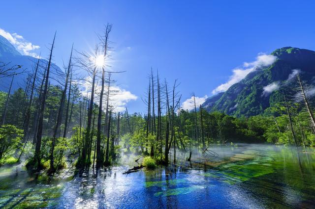 画像: 岳沢湿原(イメージ)木道が続く梓川右岸遊歩道を明神方面に15分ほど歩いていくと、岳沢湿原があります。 岳沢から流れ来る筋と善六沢が合流するあたりに広がる湿原です。