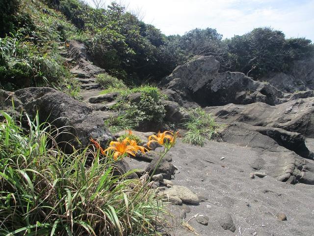 画像9: 来年夏のツアーの企画素材を探して三浦半島の荒崎海岸を歩いてみました!