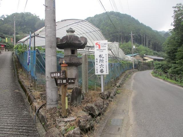 画像4: 9月の山旅会現地集合ツアー 「寺坂棚田から日向山」 の直前下見の報告です!