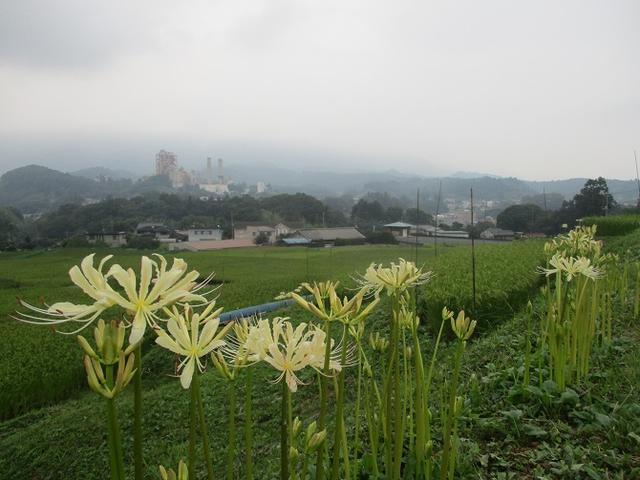 画像3: 9月の山旅会現地集合ツアー 「寺坂棚田から日向山」 の直前下見の報告です!