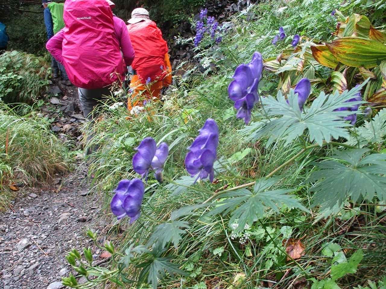 画像7: 9月9日より山旅会 「ゆったり仙丈ヶ岳」 ツアーに行ってきました!