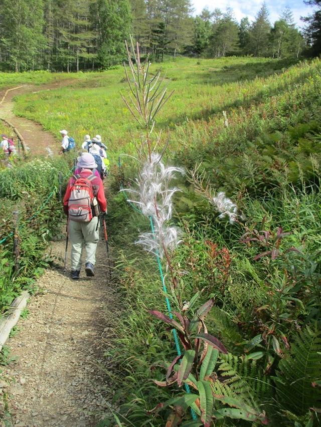 画像10: 9月12日に山旅会 「入笠山」 ツアーに行ってきました!