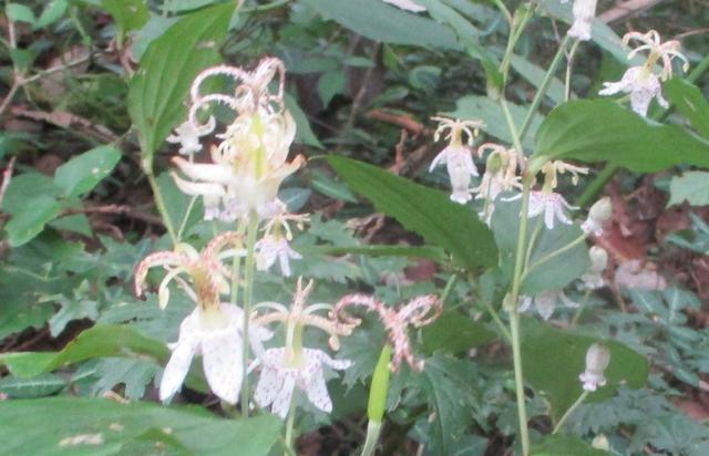 画像4: 9月14日に山旅会 「城山から景信山」 ツアーに行ってきました!