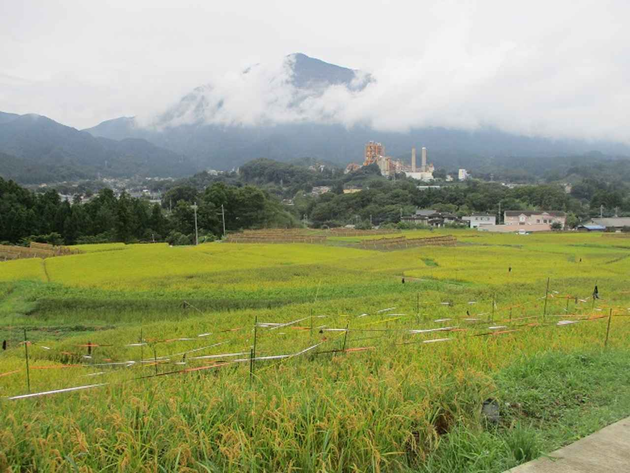 画像1: 山旅会ツアー11月までの催行状況 のご案内です!