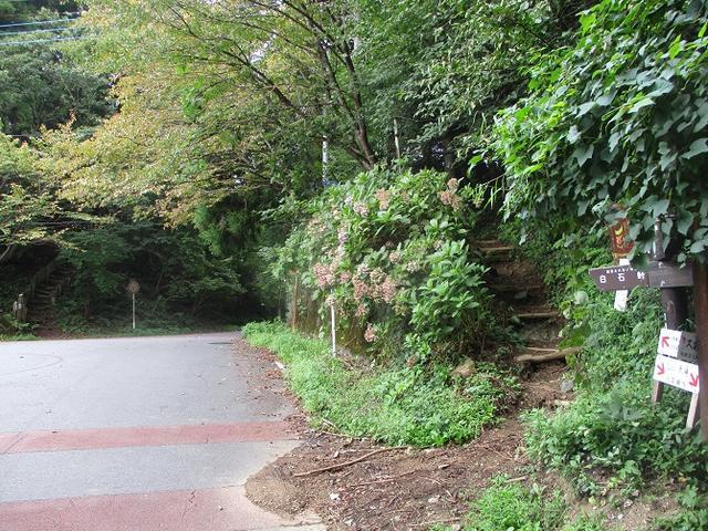 画像3: 【山旅会・登山ガイドこだわりツアー】岡田ガイドからの便り・大霧山ツアーの下見に行ってきました!
