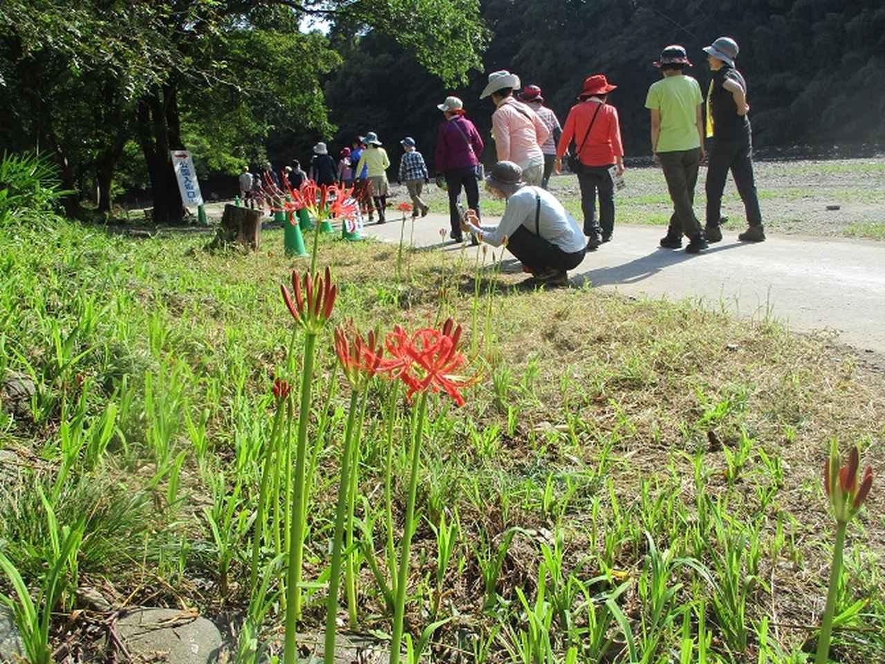 画像10: 9月20日に山旅会 「ユガテ~日和田山~巾着田」 ツアーに行ってきました!