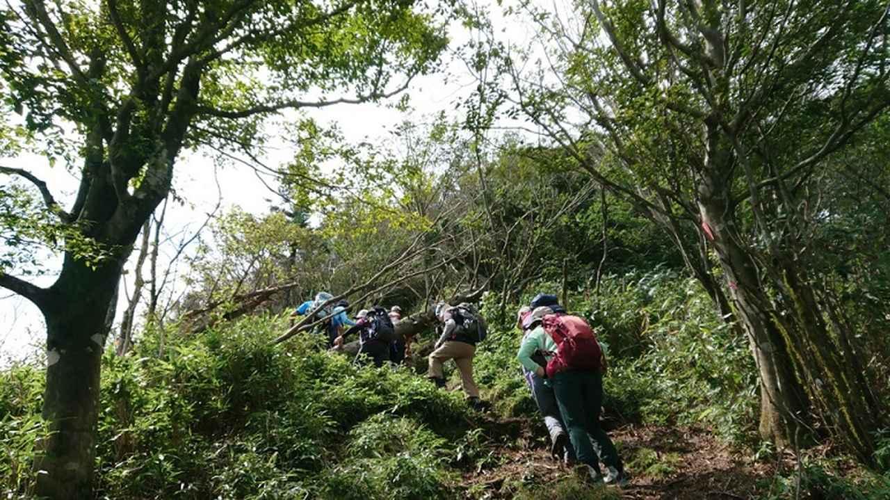 画像3: 9月19日に佐藤威行ガイドのコースで、毛無山塊にたたずむ 「雨ケ岳」 へ行って来ました♪