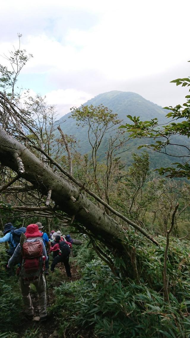 画像9: 9月19日に佐藤威行ガイドのコースで、毛無山塊にたたずむ 「雨ケ岳」 へ行って来ました♪