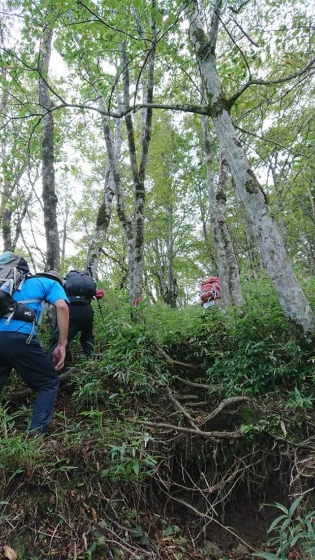 画像6: 9月19日に佐藤威行ガイドのコースで、毛無山塊にたたずむ 「雨ケ岳」 へ行って来ました♪