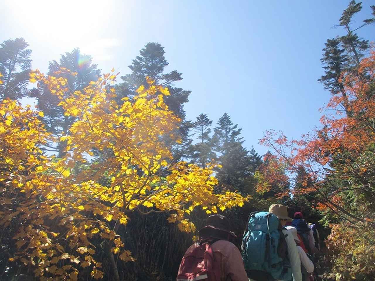 画像5: 9月30日から2日間岡田ガイドのコースで 八幡平・秋田駒ヶ岳 に行ってきました♪