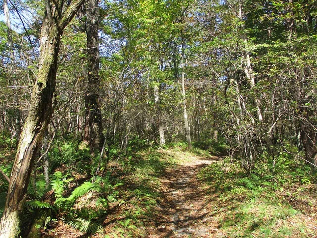 画像8: 10月の山旅会 「小浅間山と信濃路自然歩道」 の直前下見にいってきました!
