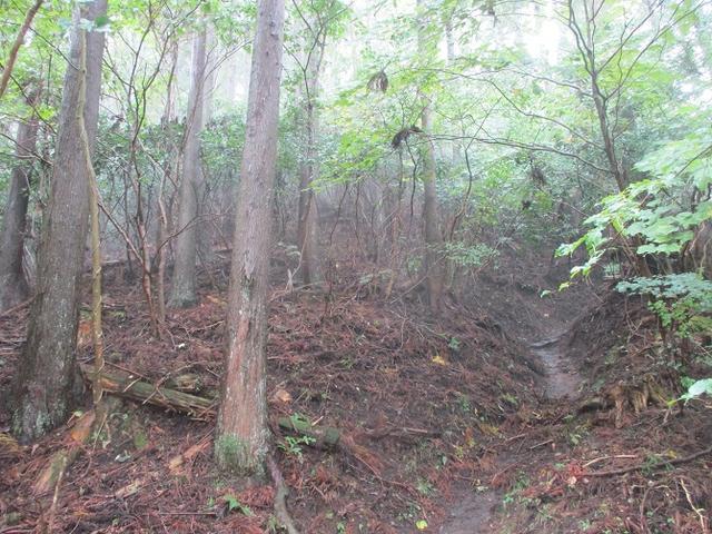 画像3: 10月の山旅会 「矢倉岳」 ツアーの下見に行ってきました!
