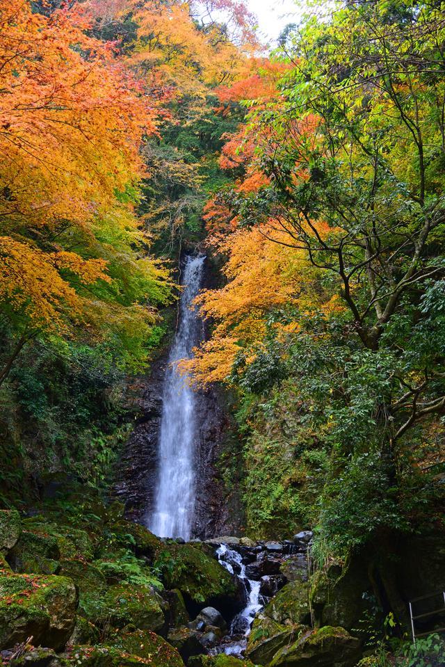 画像: 養老の滝(紅葉の見頃は例年11月中旬~12月上旬)