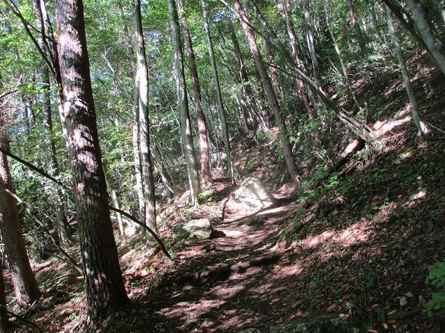 画像1: 10月の山旅会 「日向山」 の下見に行ってきました!
