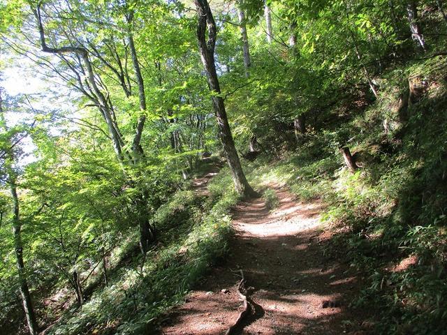 画像3: 10月の山旅会 「日向山」 の下見に行ってきました!