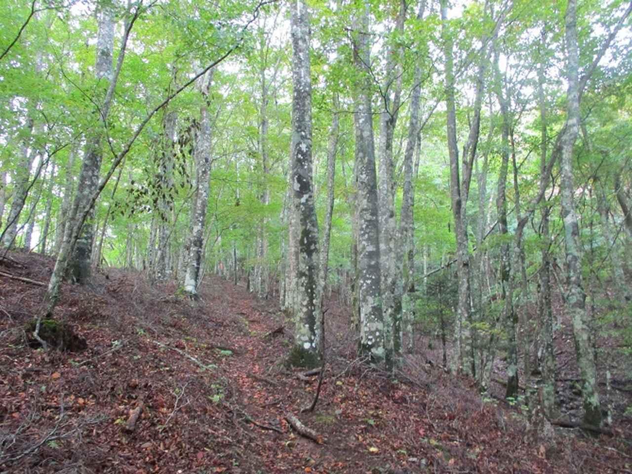 画像3: 10月の山旅会 「御坂黒岳」 ツアーの下見に行ってきました!