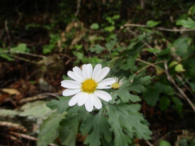 画像2: 10月の山旅会 「御坂黒岳」 ツアーの下見に行ってきました!