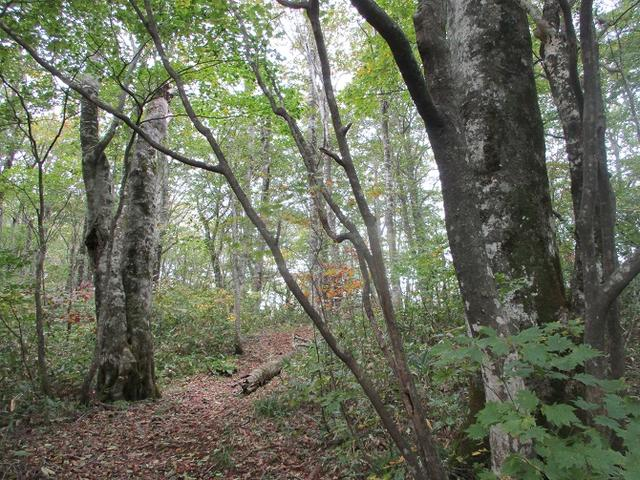 画像5: 【山旅会・登山ガイドこだわりツアー】岡田ガイドからの便り・尼ヶ禿山ツアーの下見に行ってきました!