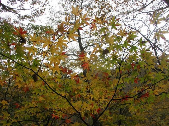 画像12: 先日10月21日に山旅会 小浅間山 に行ってきました♪